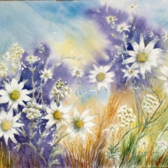 yvonne west Flannel Flowers watercolour painting on 300gsm Saunders waterford paper half sheet 21x14 sold