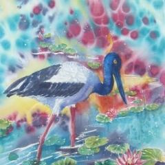 "yvonne west Jabiru in Kakadu watercolour 26x19"" sold."