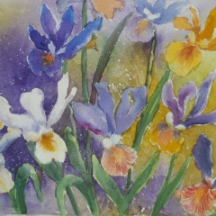 Dutch-Irises-2