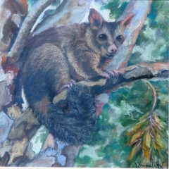 Possum-in-the-Paperbark