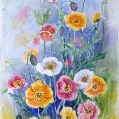 Poppy-Garden