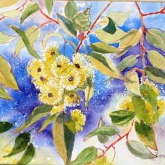 Yellow-Gum-blossoms