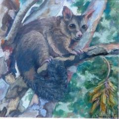 Possum-in-the-Paperbark