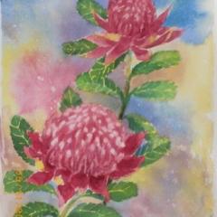 "yvonne west Waratahs watercolour 15x11"" sold"