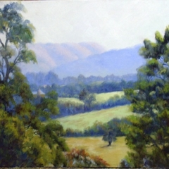 Afternoon Light- Kurrajong
