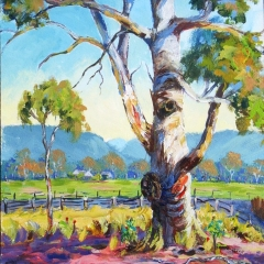 Gum Tree Windsor