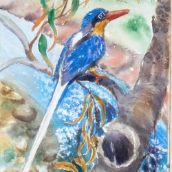 kingfisher flora and fauna yvonne west